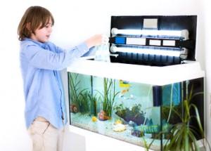 Schimmel durch Aquarium in der Wohnung
