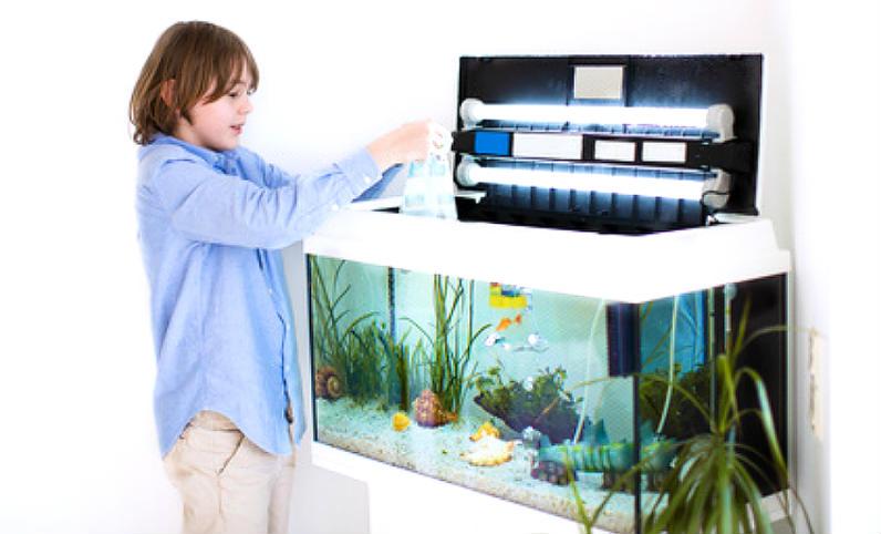 schimmel durch aquarium in der wohnung, Wohnzimmer